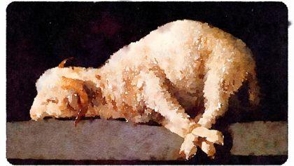 Aux agneaux immolés